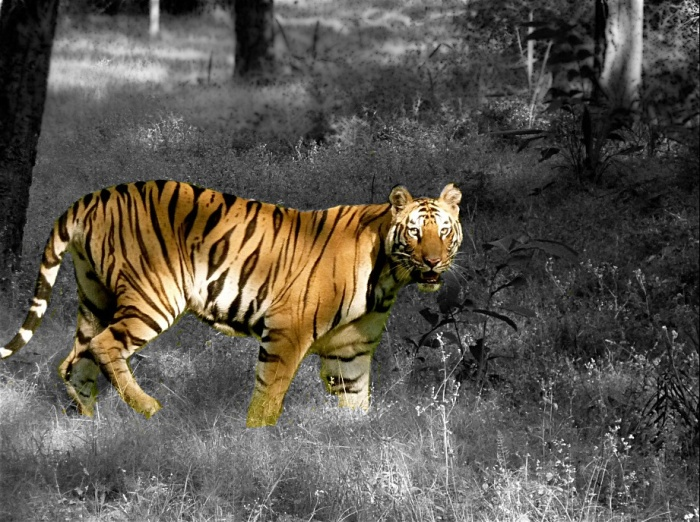 Bandhavgarh National Park, Madhya Pradesh. Taken by Monica Sarkar (all rights reserved).